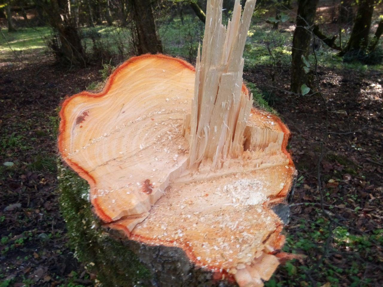 رایحه جنگل و چوب